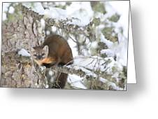 A Pine Marten Looks For Food Greeting Card