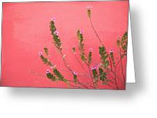 A Pink Flowering Plant Growing Beside A Greeting Card by Stuart Westmorland