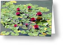 A Place Of Rest In The Sun Greeting Card by