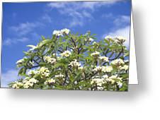 A Plumeria Caracasana Tree In Full Greeting Card