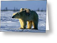 A Polar Bear Mother With Her Cub Greeting Card