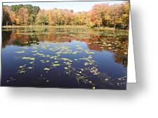 A Pond Of Reflective Beauty Greeting Card