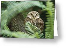 A Portrait Of A Captive Burrowing Owl Greeting Card