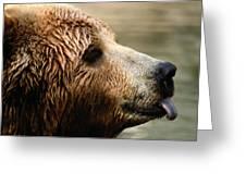 A Portrait Of A Captive Kodiak Brown Greeting Card
