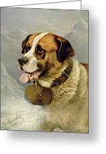 A Portrait Of A St. Bernard Greeting Card