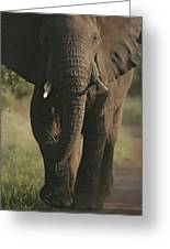A Portrait Of An African Elephant Greeting Card