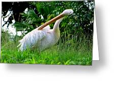 A Preening Stork Greeting Card