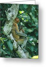 A Proboscis Monkey Greeting Card