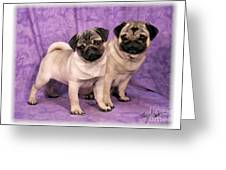 A Pug And A Pug Greeting Card