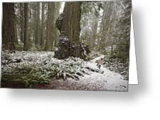 A Rare Snow Dusts The Trail Through Del Greeting Card
