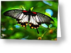 A Real Beauty Butterfly Greeting Card