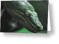 A Real Reptile Greeting Card