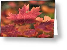 A Red Fall  Greeting Card