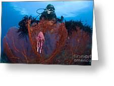 A Red Sea Fan With Sponge Colored Clam Greeting Card