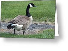 A Regal Goose Greeting Card