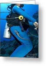 A Remora Attached To A Diver, Kimbe Greeting Card