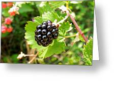 A Ripe Blackberry Greeting Card