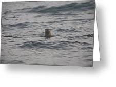 A River Otter Sticks His Head Greeting Card
