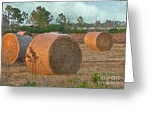 A Roll In The Hay Greeting Card