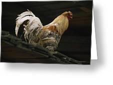 A Rooster Struts On A Wood Roof Greeting Card
