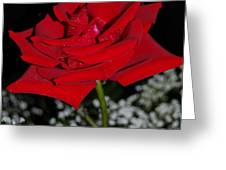 A Rose For Suzanne Greeting Card