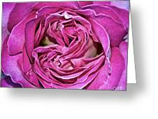 A Rose Is A Rose ... Greeting Card