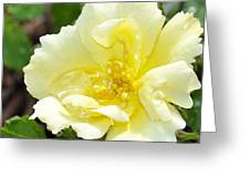 A Rose Is A Rose Rrp Greeting Card