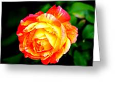 A Rose Greeting Card by Jose Lopez