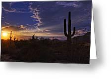 A Saguaro Sunset  Greeting Card
