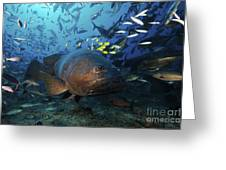 A School Of Golden Trevally Follow Greeting Card