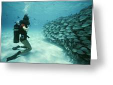 A School Of Grunts Swims By A Diver Greeting Card