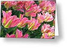 A Sea Of Pink Tulips. Square Format Greeting Card