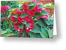A Section Of Pink Bougainvillea Flowers Greeting Card