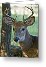 A Seven Point Profile 9752 Greeting Card