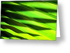 A Shadow Of A Palmfrond On A Palmfrond Greeting Card by Catherine Natalia  Roche