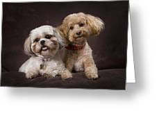 A Shihtzu And A Poodle On A Brown Greeting Card