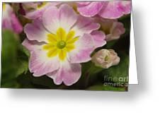 A Shy Flower  Greeting Card