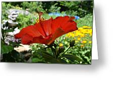 A Side Of Hibiscus Greeting Card