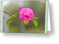 A Single Rose Greeting Card