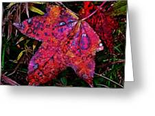 A Single Sweetgum Leaf Greeting Card