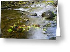 A Small Dam Of Golden Leaves  Greeting Card