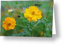 A Small Dragon Fly Sitting On A Yellow Flower Greeting Card