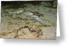 A Small School Of Grey Mullet Swim Greeting Card