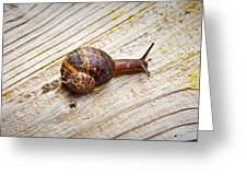 A Snail Sliding Across A Wooden Surface Greeting Card by Tom Gowanlock