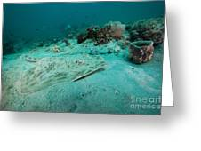 A Southern Stingray On The Sandy Bottom Greeting Card
