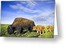 A Sow Bison Guides Her Calves On A Walk Greeting Card