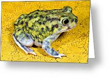 A Spadefoot Toad Greeting Card