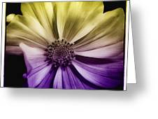 A Special Daisy II Greeting Card