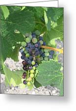 A Spider On The Grapes Greeting Card