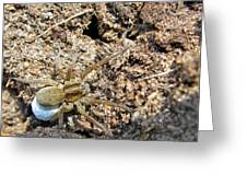 A Spider With The Egg Sack Square Greeting Card